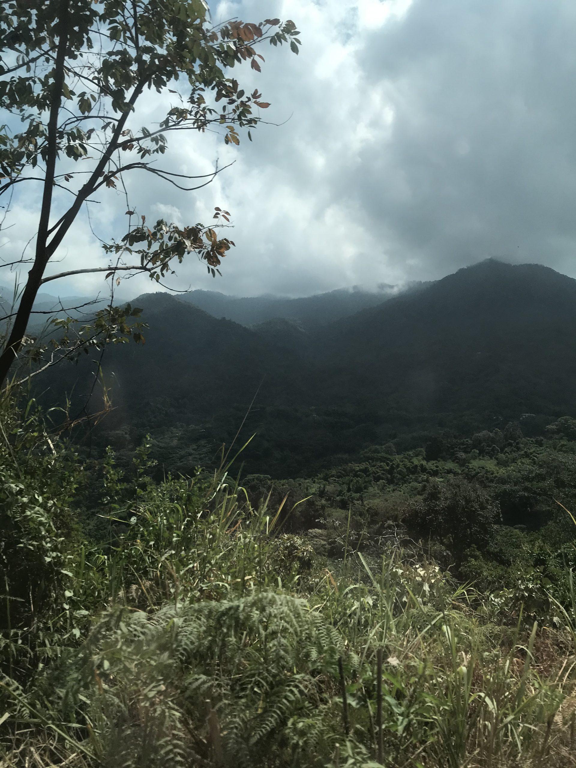 Minca Jungle